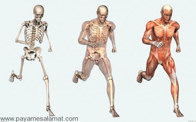 ده نکته درباره بدن انسان