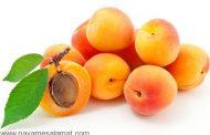 خواص زردآلو - مِشمِش - Abricot