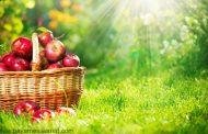خواص سیب - تُفّاح - Apple