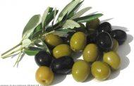 خواص زیتون - زَیتُون - Olive