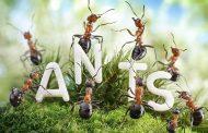 با معجزه آسا ترین خواص درمانی مورچه آشنا شوید
