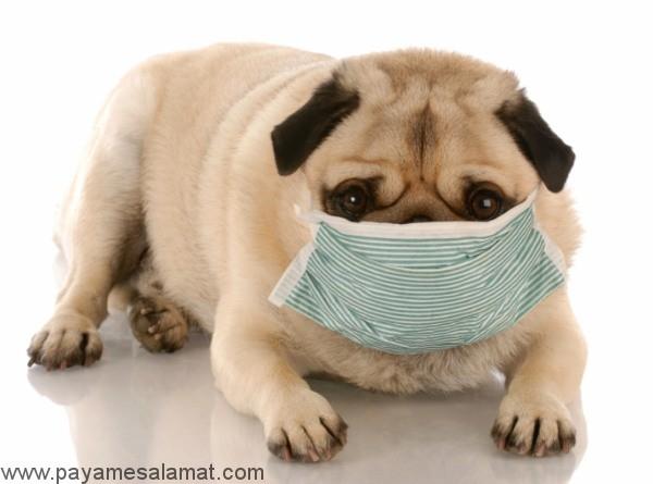 کیست هیداتیک بیماری مشترک انسان و سگ