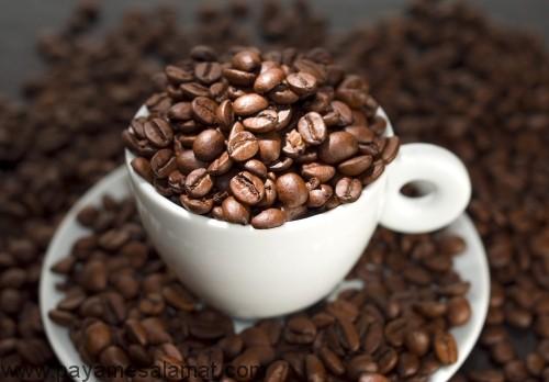 مهمترین منابع اصلی کافئین کدامند؟