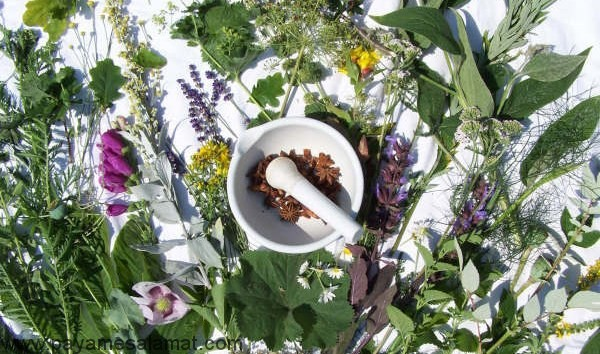 مهمترین گیاهان اشتها آور معطر و بادشکن