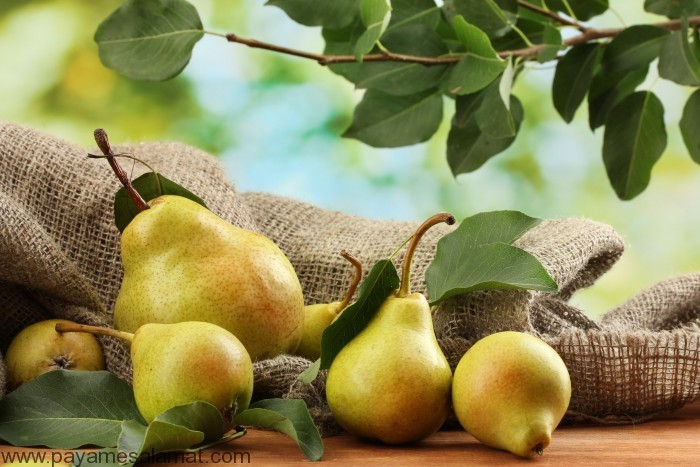 خواص گلابی - سَفَرجَل - Pear