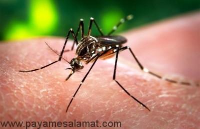 همه آنچه که باید درباره ویروس زیکا Zika بدانید