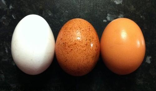 کالری تخم مرغ و تخم سایر پرندگان