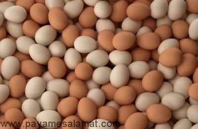 میزان کالری تخم پرندگان
