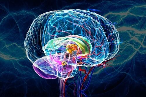 تاثیر استرس بر روی عملکرد مغز