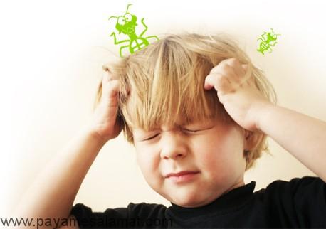 روش های خانگی موثر برای درمان شپش سر