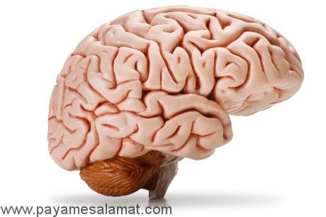 همه چیز در مورد مغز و کارکرد آن