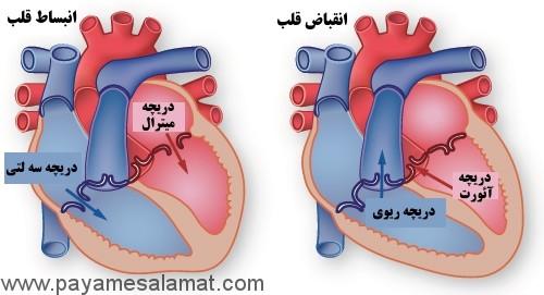 بیماری های دریچه های قلب