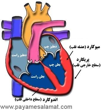 همه چیز در مورد آماس قلب یا میوکاردیت