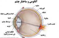 عملکرد و ساختار چشم