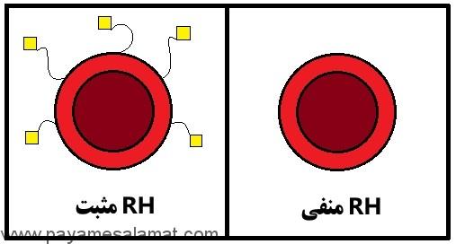 همه آن چه که باید در مورد ناسازگاری RH خون بدانید