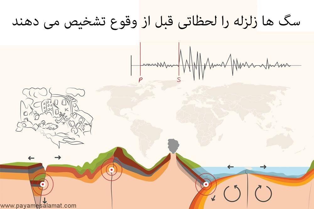 تشخیص زلزله توسط سگ ها
