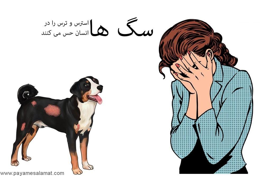 سگ ها استرس و ترس را در انسان حس می کنند