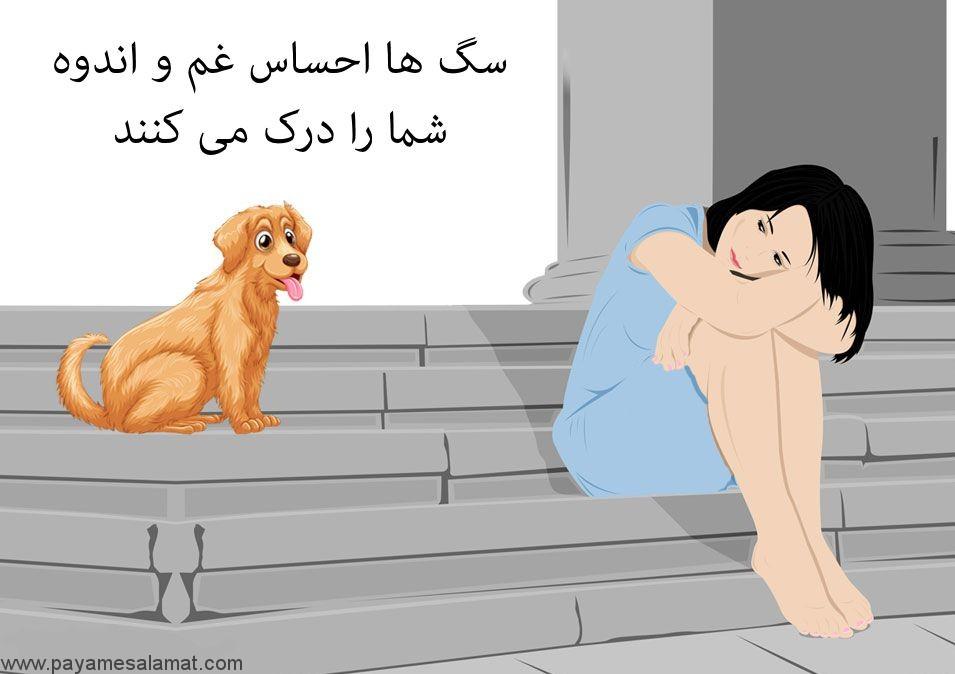 سگ ها احساس غم و اندوه شما را درک می کنند