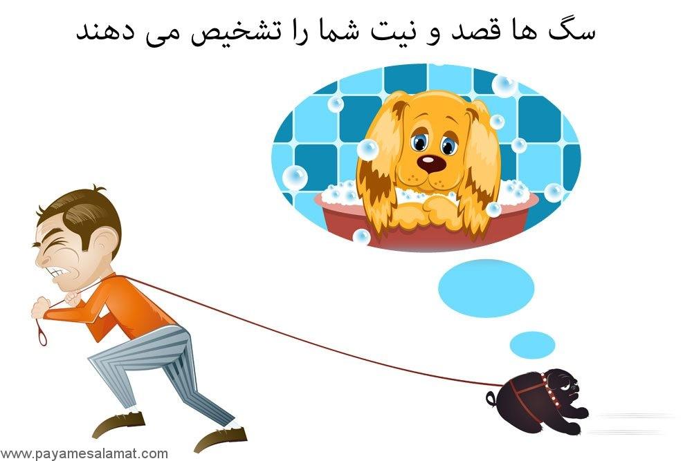 سگ ها و تشخیص قصد و نیت