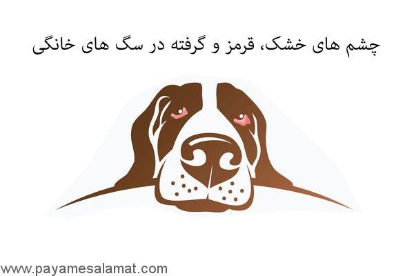 چشم های خشک، قرمز و گرفته در سگ های خانگی