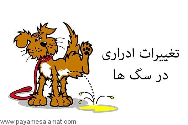تغییرات ادراری در سگ های خانگی