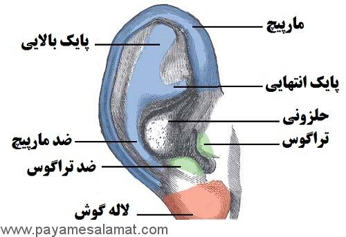 مراقبت های لازم پس از سوراخ کردن غضروف گوش و سایر اندام ها