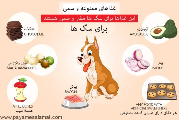 غذاهای مضر برای سگ ها که نباید به آن ها بدهید