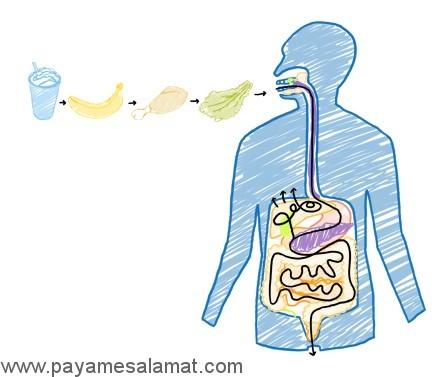 کالری سوزی در فرآیندهای بدن چقدر است؟