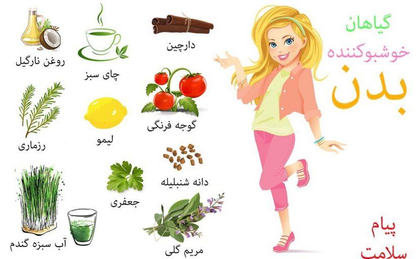 غذاها و گیاهان خوشبو کننده بدن