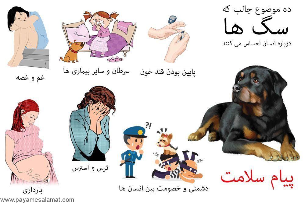 احساس سگ ها درباره انسان