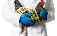 علل، علائم، درمان و پیشگیری از آنفلوانزای مرغی