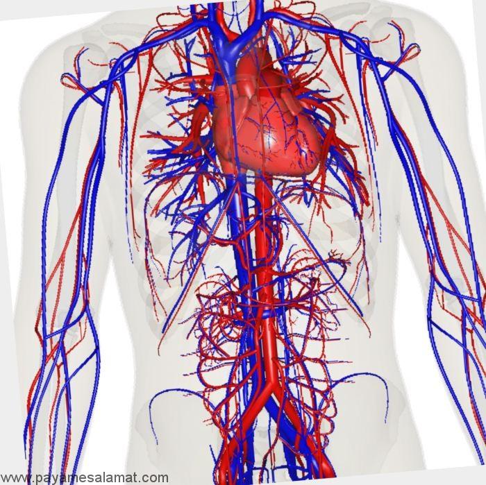 بهبود گردش خون به روش های طبیعی