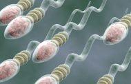طول عمر اسپرم چقدر است و چگونه می توان کیفیت آن را بهبود داد؟