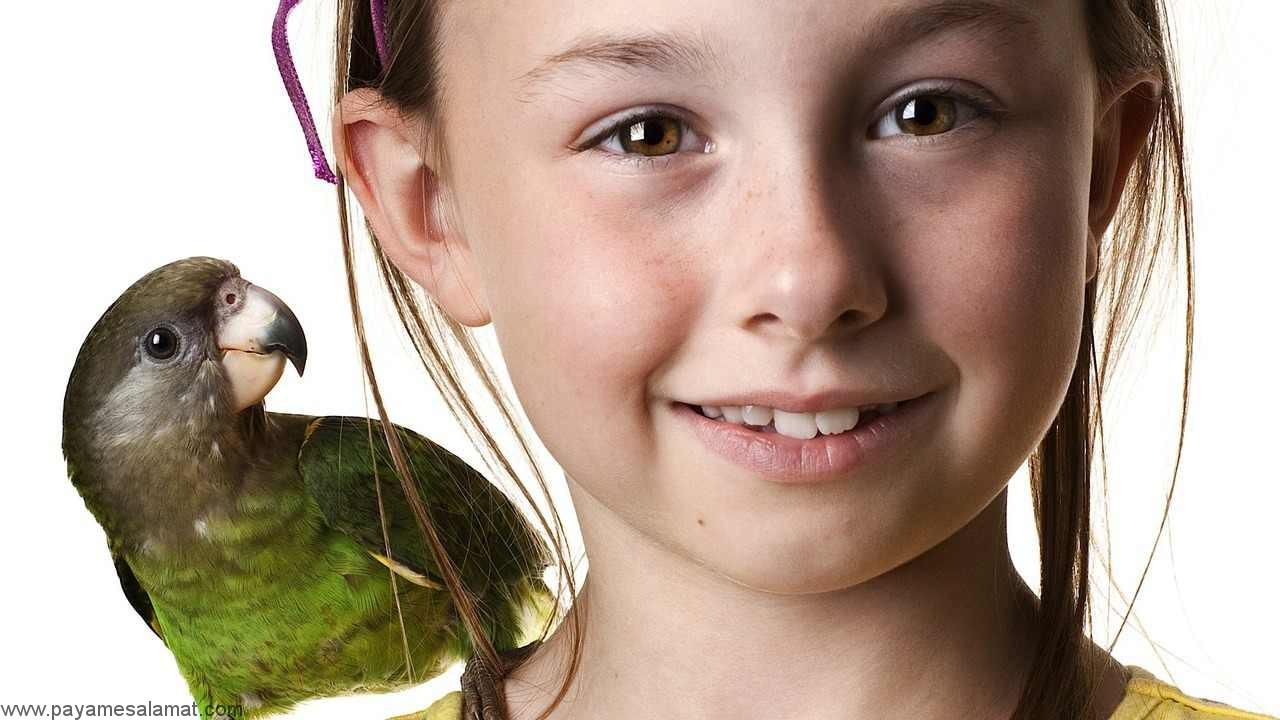 همه آن چه که باید در مورد نگهداری از پرندگان خانگی بدانید