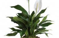 بهترین گیاهان برای تصفیه هوای خانه