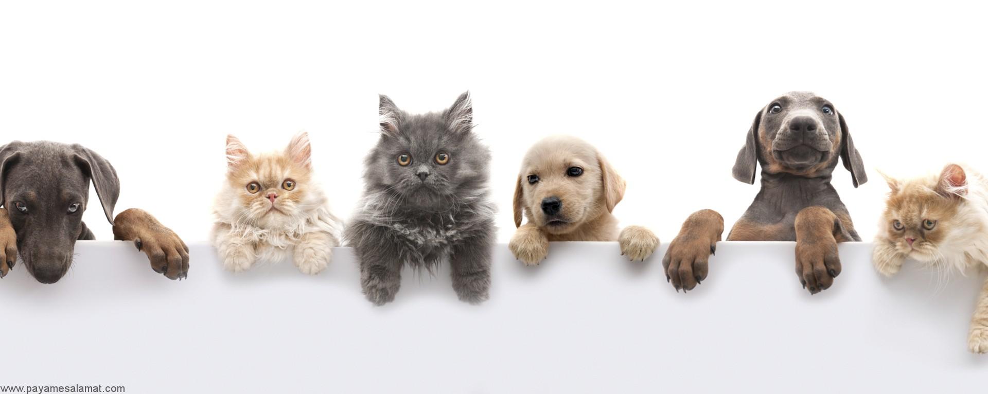 نکات مهم در مورد نگهداری از حیوانات خانگی