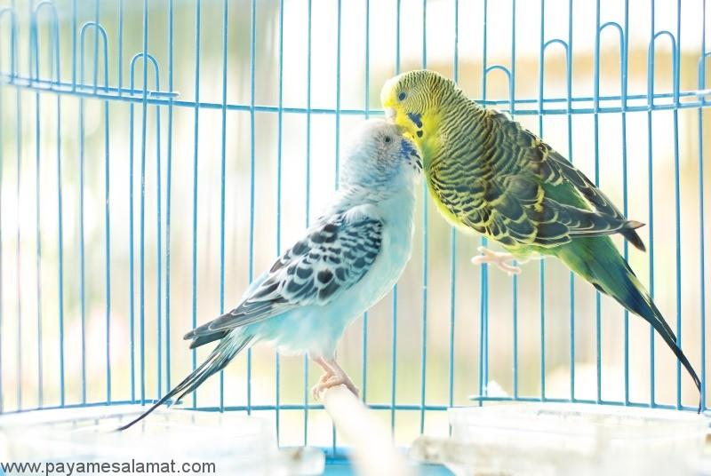 نگهداری از پرندگان خانگی