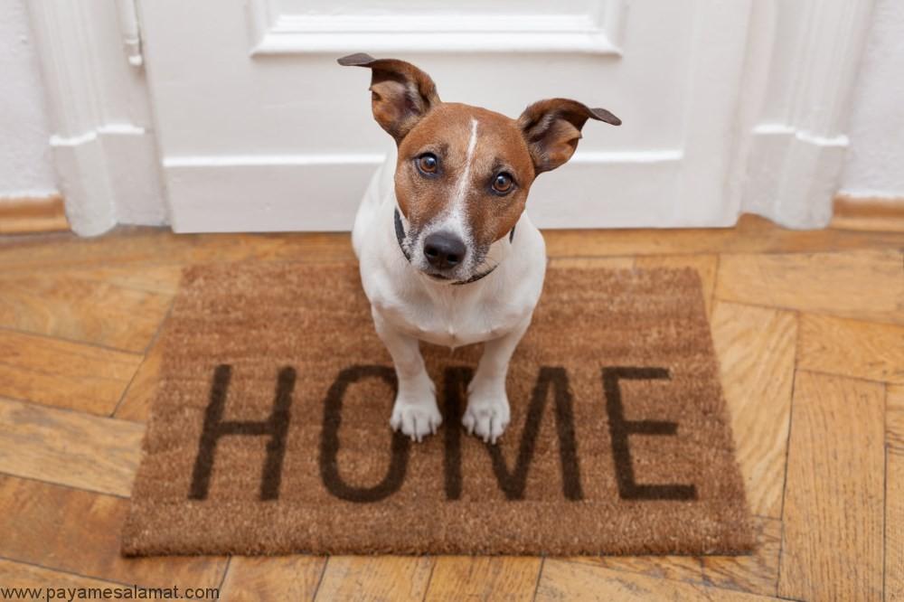 راهنمای کلی برای نگهداری از سگ