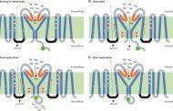 بیماری ارثی کانال قلبی یا اختلال در کانال های یونی قلب Cardiac Channelopathies