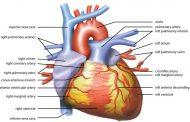 بیماری اختلال عملکرد گره سینوسی قلب چیست؟