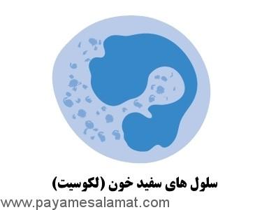 انواع سرطان از نظر سلول های درگیر در بیماری