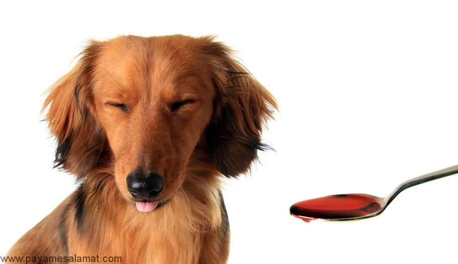 مسمومیت با ایبوپروفن در سگ ها