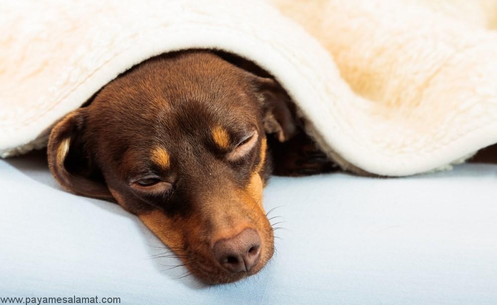 کم خونی در سگ ها (متهموگلوبینمی)