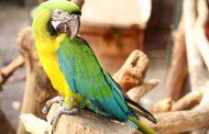 نشانه ها، علل و درمان آسپرژیلوس مرغی یا شایع ترین عفونت دستگاه تنفسی در پرندگان