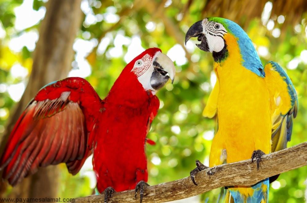 علائم و پیشگیری از کمبود ویتامین A در پرندگان خانگی