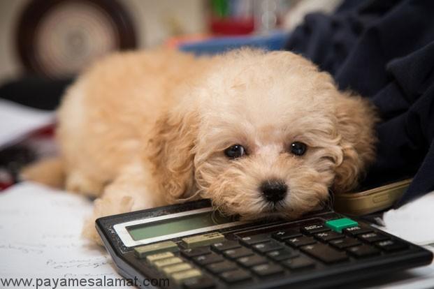 کالری مورد نیاز سگ ها چقدر است؟