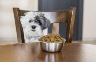 کالری مورد نیاز سگ ها چقدر است و چگونه محاسبه می شود؟