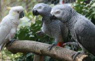 علائم، علل و درمان کمبود کلسیم در پرندگان