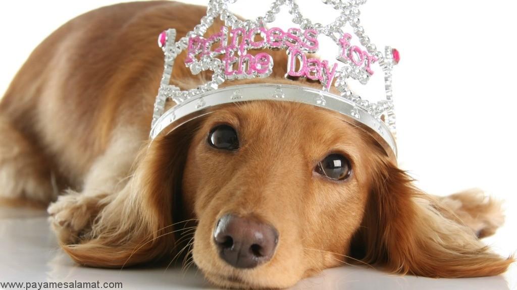 علل، نشانه ها، تشخیص و درمان ناباروری در سگ های ماده