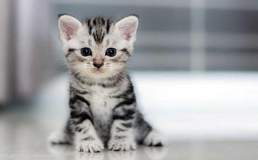 علائم، علل، روش های تشخیص و درمان کم خونی فقر آهن در گربه ها